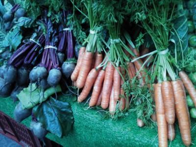 Food and crop diversity under threat in Europe