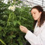 Opening a window into vector-borne plant viruses