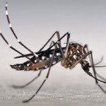 MI-Dengue: A novel tool for dengue vector monitoring in Brazil
