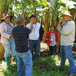 Another major step in better disease management in the global banana sector