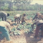 GHANA IPM PROGRAMME: PAST, PRESENT AND FUTURE