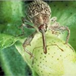History of Pest Management in Texas and the Southern United States and How Recent Grower Adoption of Preventative Pest Management Technologies Have Diminished the Capability for IPM Delivery
