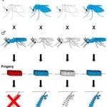 <em>Wolbachia</em> Bacteria and Biocontrol of Arboviral Diseases