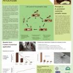 Parasitic wasps versus Anobiidae