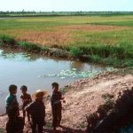 The role of pesticides in the SE Asian rice IPM: A view from the Mekong Delta