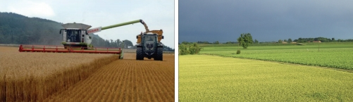 Figure 5 Cereal harvest and oilseed rape