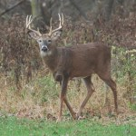 Managing Overabundant White-Tailed Deer: Is it Time to Consider Regulated Commercial Harvest?