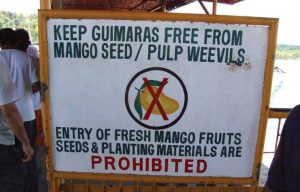Quarantine restrictions were implemented soon after the detection of the pulp weevil and mango movement from the Palwan district is restricted. Source http://bit.ly/1Rvlcsm