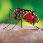 Improved monitoring and potential control for the Asian Tiger mosquito