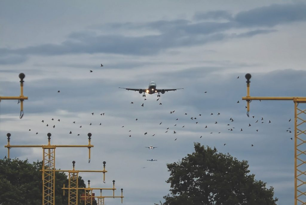 Birds are liable to cause major catastrophe, especially if they hit an engine. Photo credit Mark Winterbourne