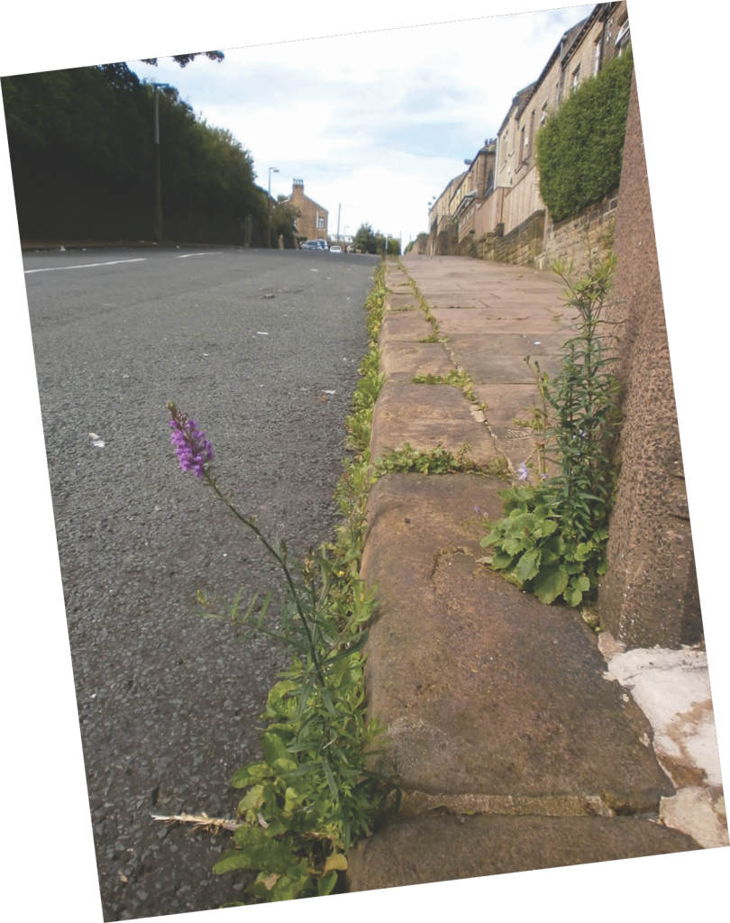 When spraying pavements, spray must be localised on actual weeds.