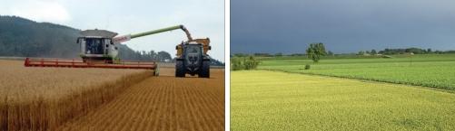 Figure 5 Cereal harvest and oilseed rape