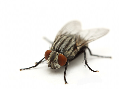 A brief history of fly control