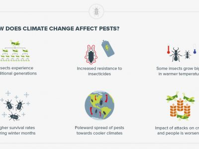 How climate change is creating a global pest problem