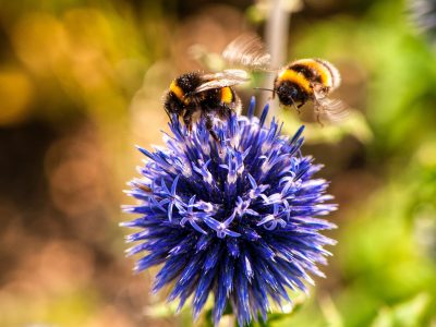 Bee-saving vote delayed two years