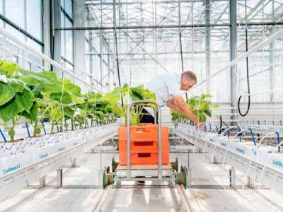 2nd International Autonomous Greenhouse Challenge